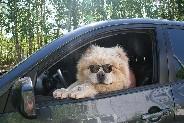 Статья на тему о воспитании и здоровье городской собаки!